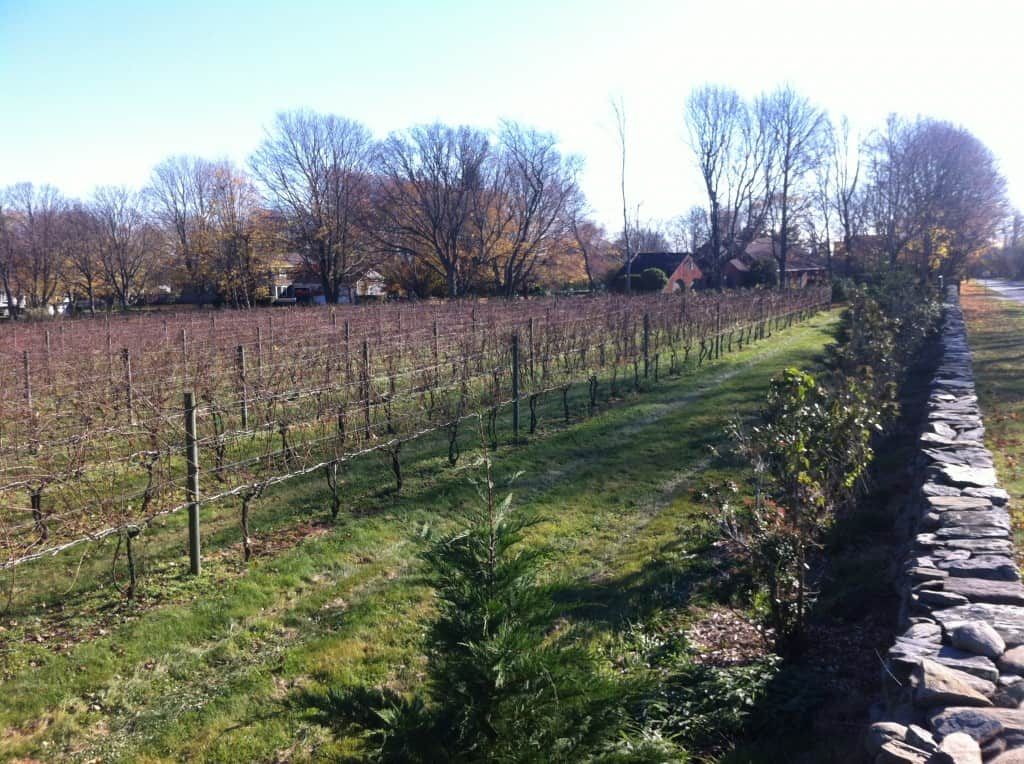 Greenvale Vineyard near Newport Rhode Island