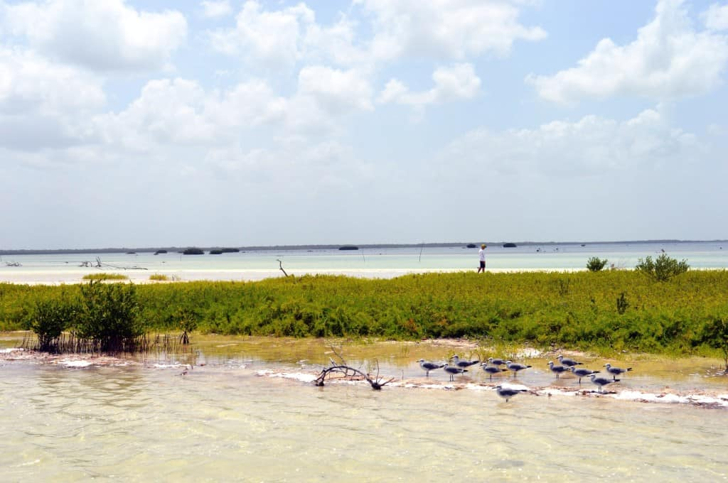 Mangroves on Isla Holbox